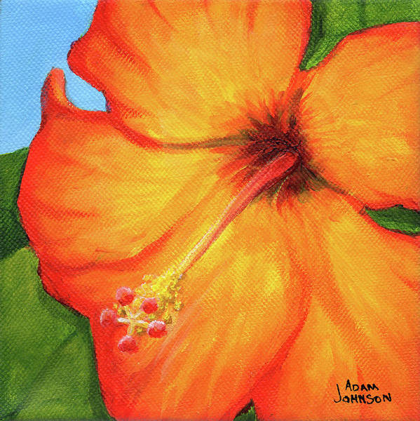 Painting - Orange Hibiscus Flower by Adam Johnson