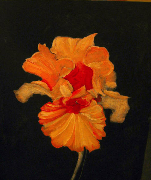 Painting - Orange Iris by Richard Le Page