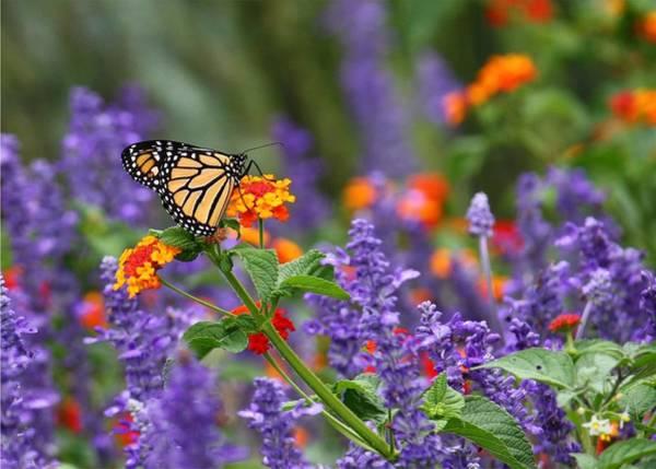 Butterfly Garden Photograph - Orange Juice by Lori Deiter