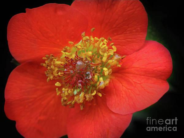 Photograph - Orange by Karen Adams