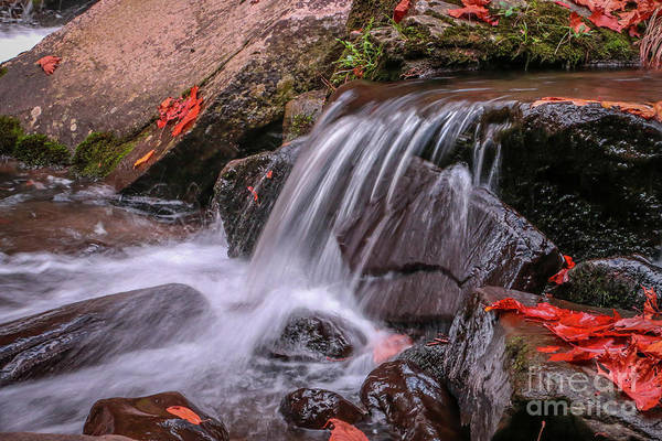 Photograph - Orange Leaf Falls by Tom Claud