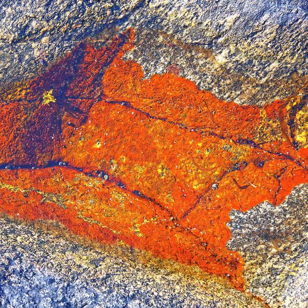 Orange Lichen Photograph - Orange Lichen by Heiko Koehrer-Wagner