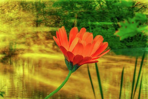 Photograph - Orange Light #d0 by Leif Sohlman