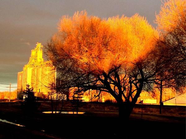 Photograph - Orange Light by David Matthews