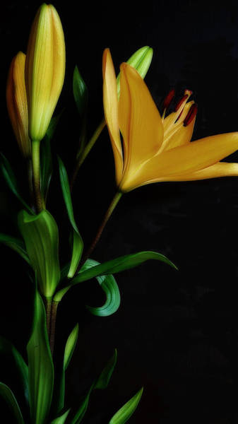 Photograph - Orange Lily One by Beth Akerman
