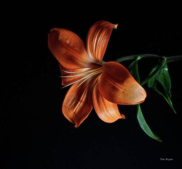 Photograph - Orange Lily by Tim Bryan