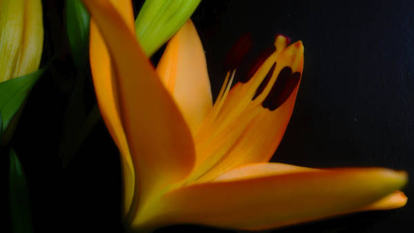 Photograph - Orange Lily Two by Beth Akerman