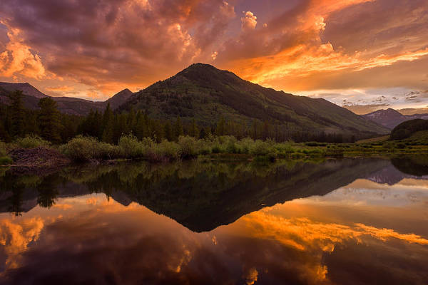 Photograph - Orange Majesty by Michael Blanchette