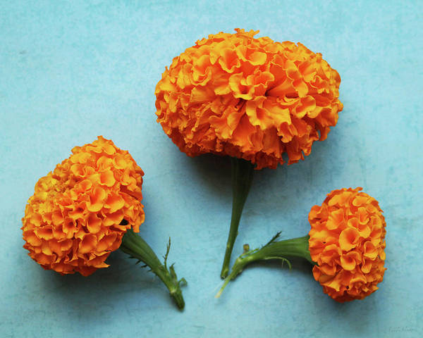 Orange Wood Photograph - Orange Marigolds- By Linda Woods by Linda Woods
