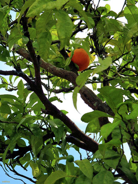 Galicia Photograph - Orange by Martine Murphy