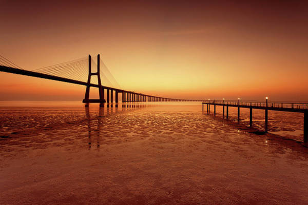 Photograph - Orange Morning by Jorge Maia