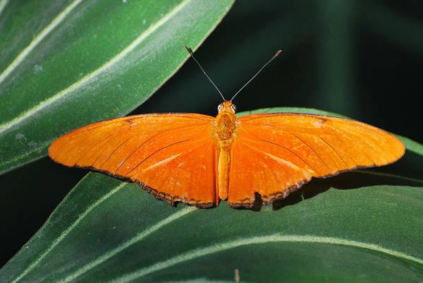 Photograph - Orange Open by Teresa Blanton