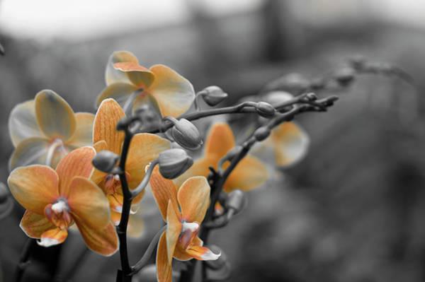 Wall Art - Photograph - Orange, Orange, Orange by Samantha Eisenhauer