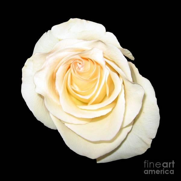 Photograph - Orange Peach Colored Rose Macro by Rose Santuci-Sofranko