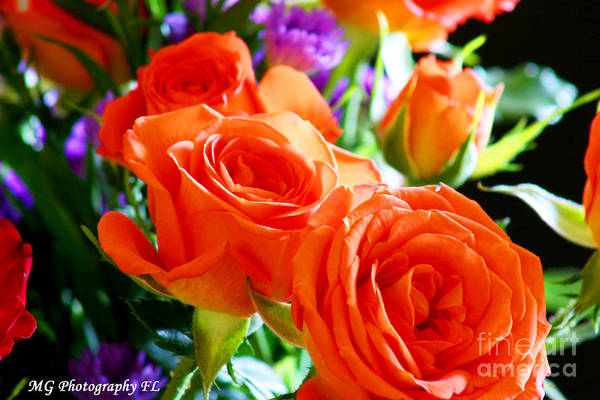 Photograph - Orange Rose by Marty Gayler