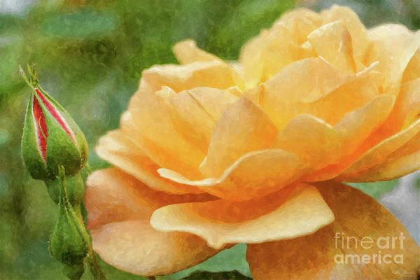 Simple Life Mixed Media - Orange Rose Painterly by Jennifer White