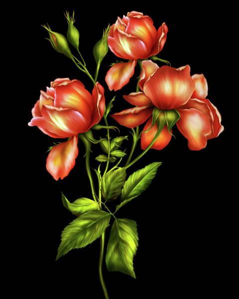 Fleur Digital Art - Orange Roses On Black by Isabella Howard