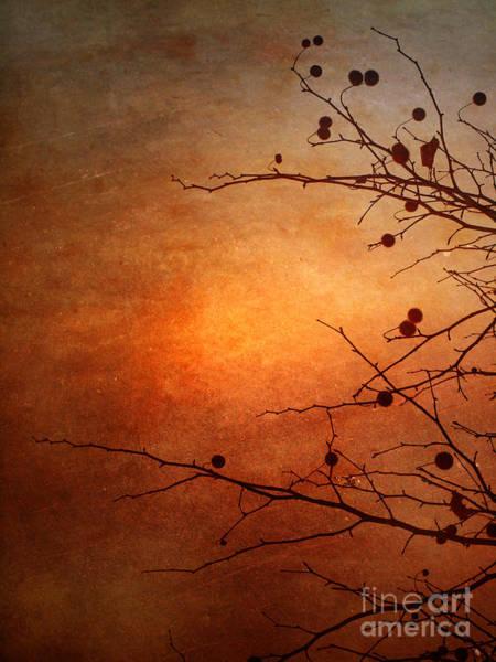 Photograph - Orange Simplicity by Tara Turner