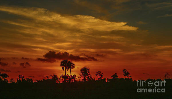 Photograph - Orange Sky And Palm Sunrise by Tom Claud