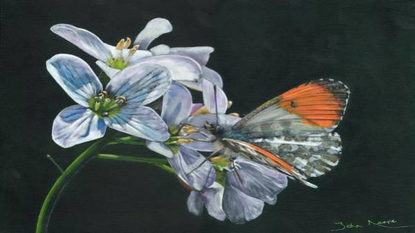Painting - Orange Tip  by John Neeve