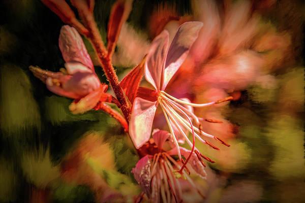 Photograph - Orange Tones #g4 by Leif Sohlman