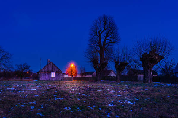Photograph - Orange Tree by Dmytro Korol