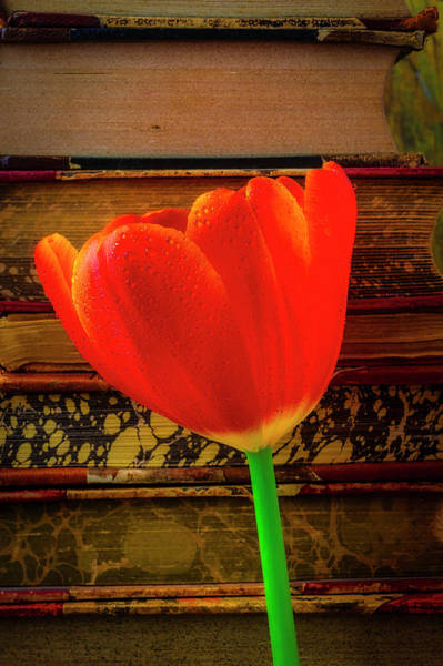 Wall Art - Photograph - Orange Tulip And Old Books by Garry Gay
