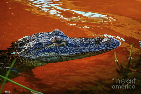 Photograph - Orange Water Gator by Tom Claud
