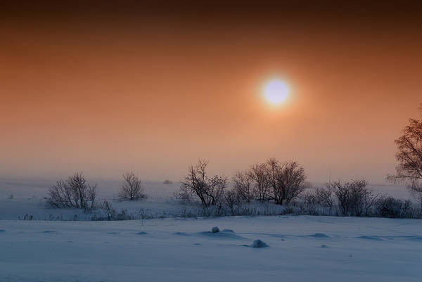 Photograph - Warm Winter Sun Snow Duel by John Williams