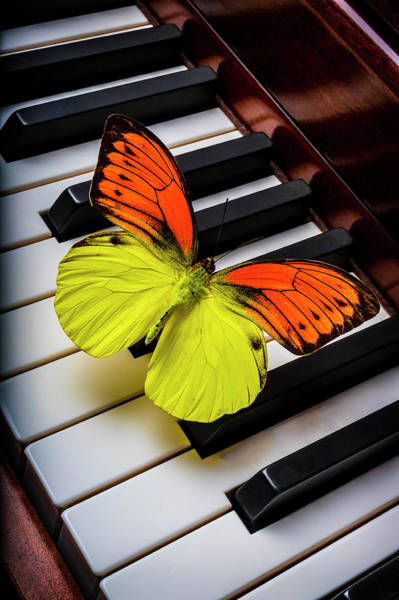 Wall Art - Photograph - Orange Yellow Butterfly On Piano Keys by Garry Gay