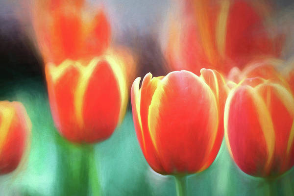 Photograph - Orange Yellow Pastel Tulips by Rospotte Photography