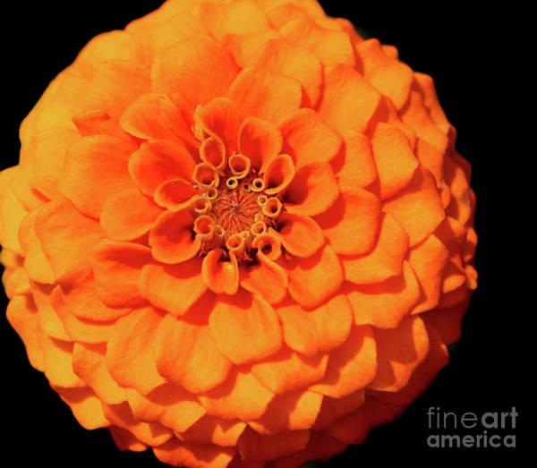 Photograph - Orange You Glad by Karen Adams