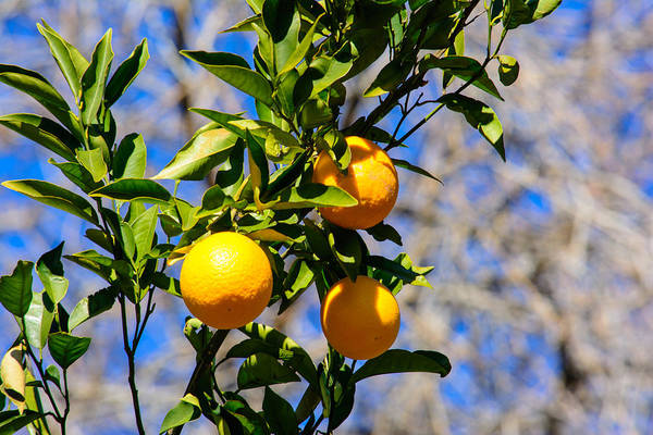 Photograph - Orange You Glad by Tikvah's Hope