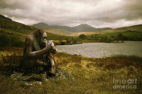 Orangutan Photograph - Orangutan With Smart Phone by Amanda Elwell