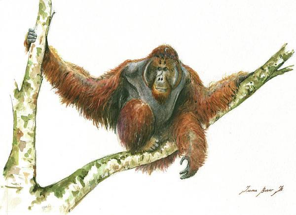 Wall Art - Painting - Orangutang by Juan Bosco