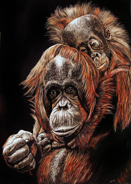 Drawing - Orangutans Two by William Underwood