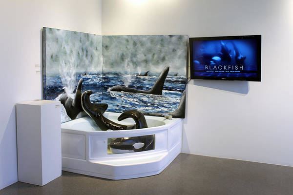 Blackfish Painting - Orca 25 Years To Life by Kirsten Vidis