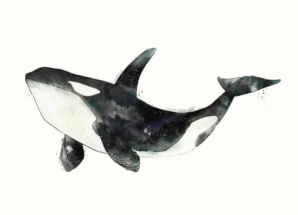 Wall Art - Painting - Orca From Arctic And Antarctic Chart by Amy Hamilton