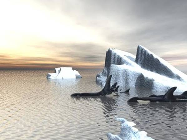 Digital Art - Orcas One Render by Darren Cannell