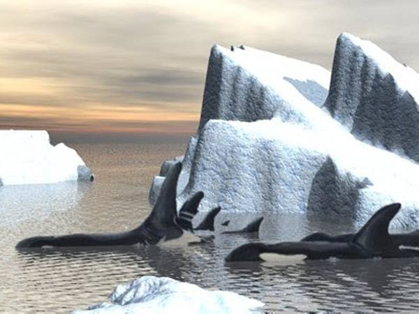 Digital Art - Orcas Two Render by Darren Cannell