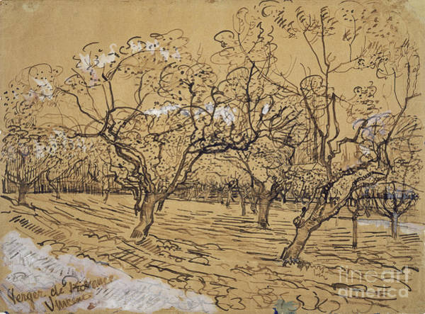 Painting - Orchard Arles by Celestial Images