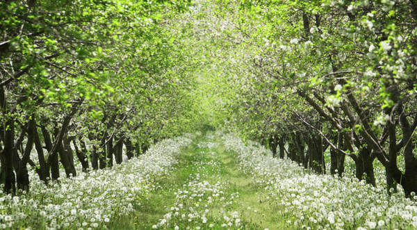 Wall Art - Photograph - Orchard by Chris Fleming