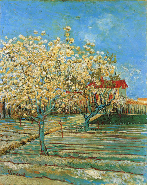 Pistil Painting - Orchard In Blossom, 1888 02 by Vincent Van Gogh