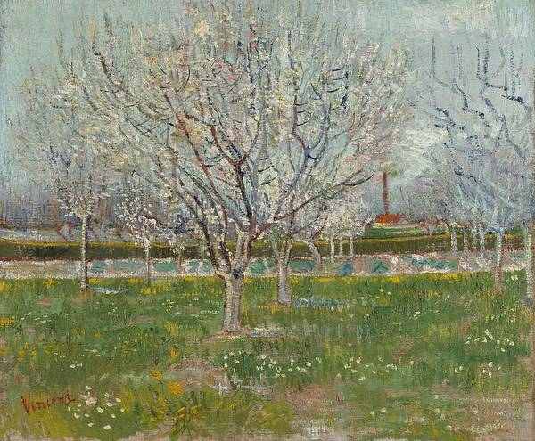 Painting - Orchard In Blossom Plum Trees by Artistic Panda