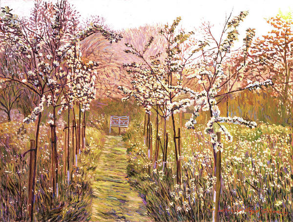 Orchard Painting - Orchard Morning by David Lloyd Glover