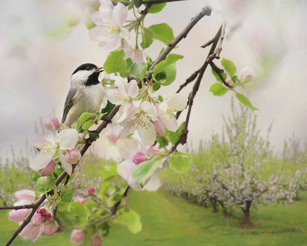 Wall Art - Photograph - Orchard Visitor 2 by Lori Deiter