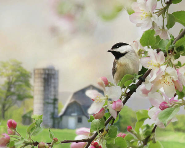 Wall Art - Photograph - Orchard Visitor by Lori Deiter