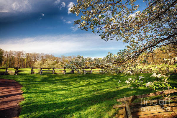 Wall Art - Photograph - Orchard With Blooming Trees by George Oze