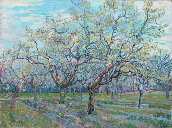 Trimming Painting - Orchard With Blossoming Plum Trees, 1888 by Vincent Van Gogh