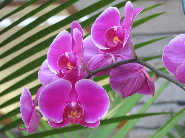 Photograph - Orchid 1 by David Dunham